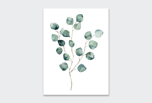 WATERCOLOUR-EUCALYPTUS-1
