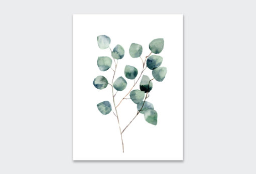 WATERCOLOUR-EUCALYPTUS-2