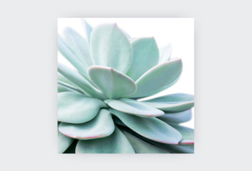COLLECTION-OF-SUCCULENTS-5