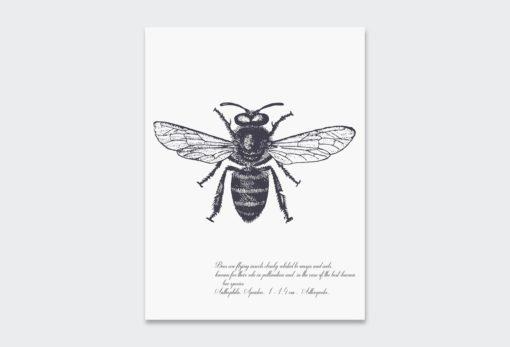 Black-Bee 1