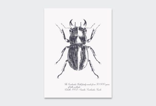Black-Beetle 2