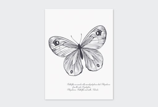 Black-Butterfly 2