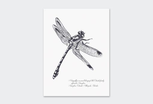 Black-Dragonfly 1